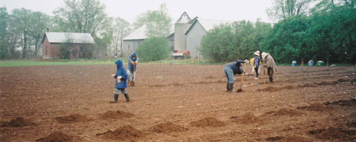 Planting a vineyard in Prince Edward County in 1999