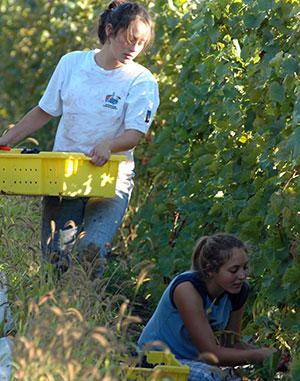 girls harvest