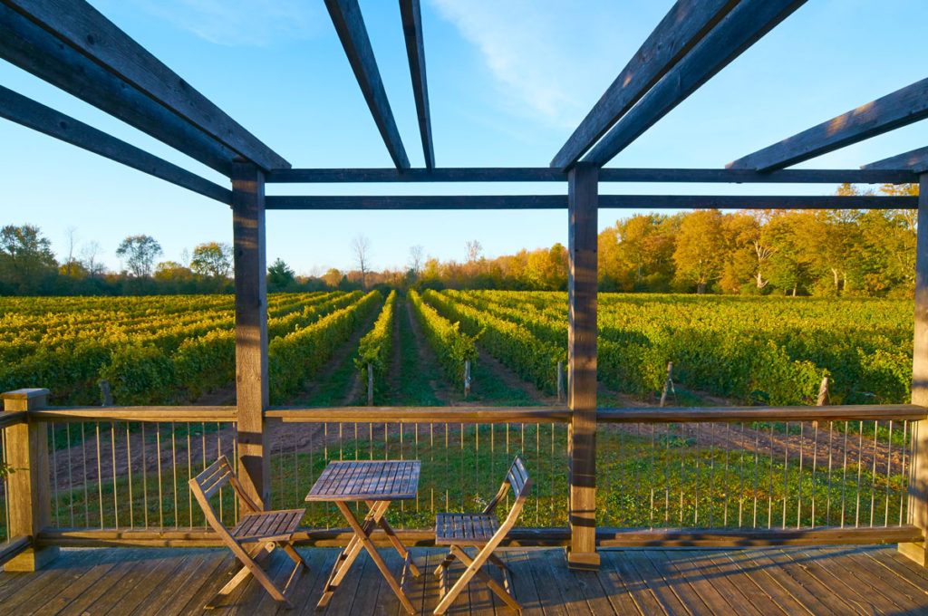 The deck off the back of the tasting room, overlooking the vineyard.